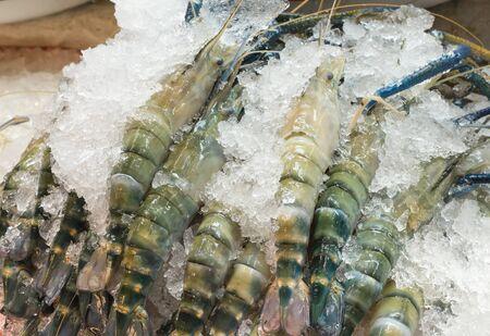 tiger shrimp: Fresh raw tiger shrimp on ice for preserve.