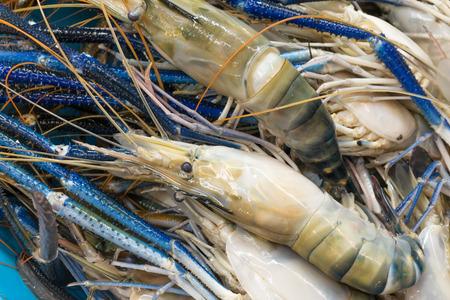 camaron: camarón tigre sin procesar fresco