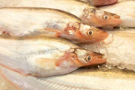 sheatfish: