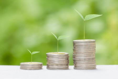 green plants: Growing money concept or can use for montage your success business. Stock Photo