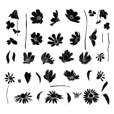 Set of black silhouette wildflowers and leaves. Isolated on white. Cosmos flowers, chicory, echinacea purpurea. Hand drawn. Vector stock illustration. Ilustracja