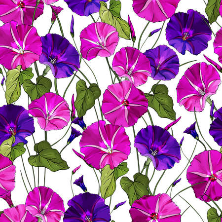 Floral seamless pattern with pink and purple flowers bindweed, green leaves on white background. Hand drawn. Morning glory for textile, wallpapers, print, web pages.