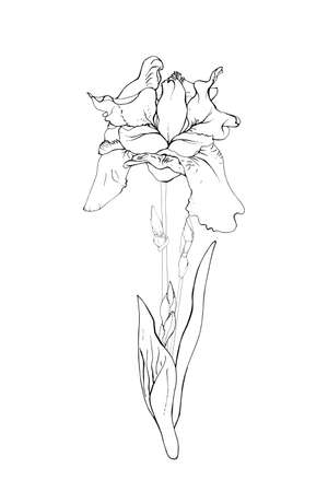 One iris flower Isolated on a white background. Hand drawn in sketch style. Vector illustration. Illusztráció
