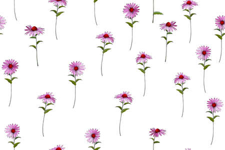 Floral seamless pattern with Echinacea Purpura. Pink flowers on white background. For your design, textile, wallpapers, print, greeting.