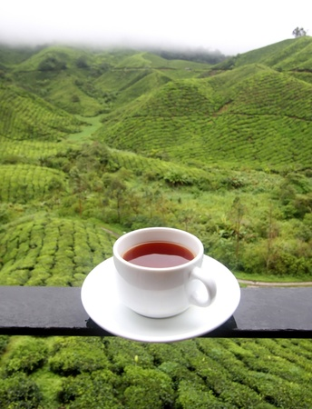 asia nature: Cup of tea background of tea plantations