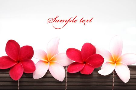 welcome mat: Pink and red Frangipani Plumeria flower on the mat