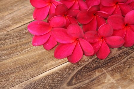Red Frangipani Plumeria flower on the wood photo