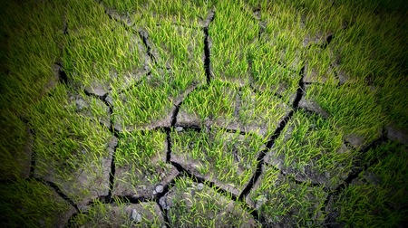 Image shows about fertilize grass & cracking farmer land.