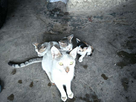 cat mother and babies ,pet ,cat ,cute and small ,animal ,motherhood ,newborn pretty kitty Standard-Bild