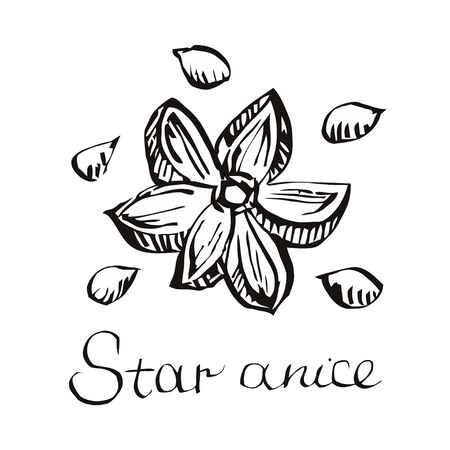 oriental medicine: Star anise botanical illustration in woodcut style