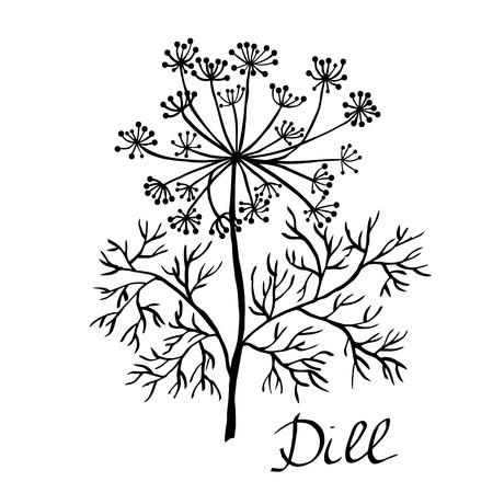 dill: dill illustration Illustration