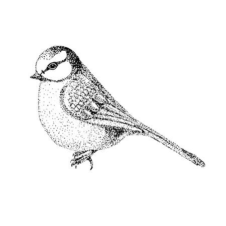 insectivorous: vector illustration bird blue tit. bird in graphic style.vintage illustration