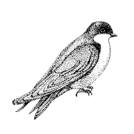 insectivorous: vector illustration bird. bird in graphic style. vector illustration urban swallow Illustration