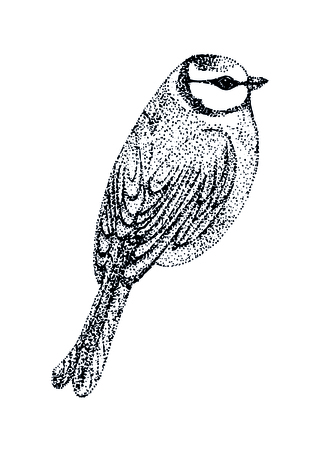 insectivorous: vector illustration bird blue tit. bird in graphic style