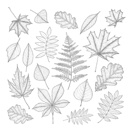 leaf line: large set of gray leaves of different trees. Hand drawing. Illustration