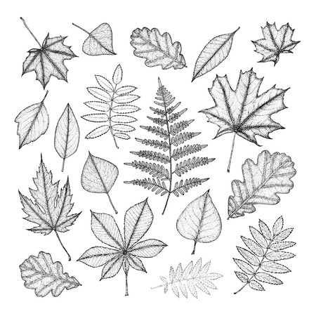 nettle: large set of leaves of various trees. Hand drawing.