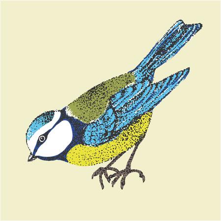 insectivorous: illustration bird blue tit. bird in graphic style Illustration