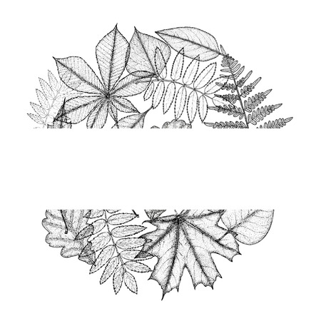 nettle: Circle from leaves with space for text. Hand drawing. Vector illustration Illustration