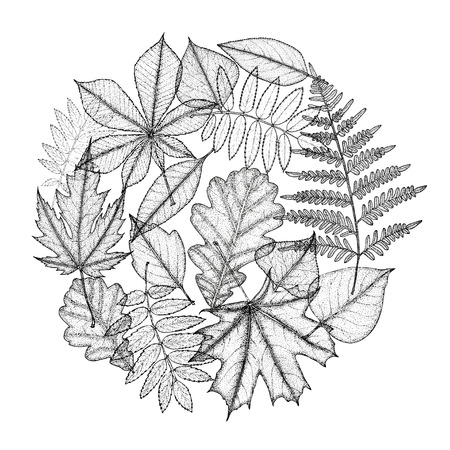 nettle: Circle of different leaves of trees. Hand drawing. Vector illustration