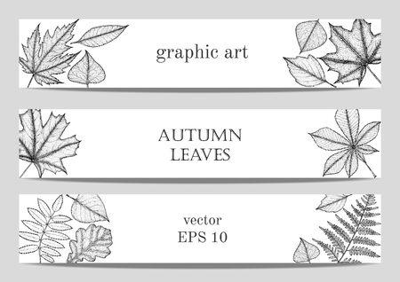 elm: Bright autumn maple, oak, birch, elm, rowan, chestnut, aspen leavesset of autumn banners with leafs