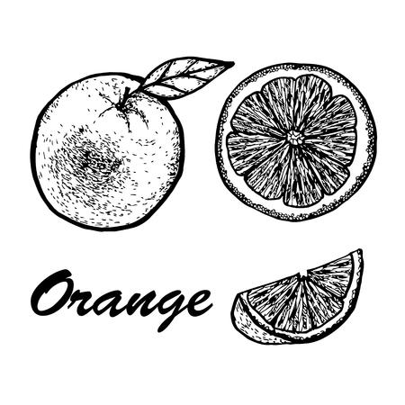 Hand drawn set of orange. Exotic tropical fruit vector drawings isolated on white background. Botanical illustration of fruits.