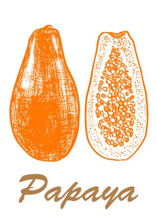 Papaya sketch hand drawn vector illustration. Ilustração