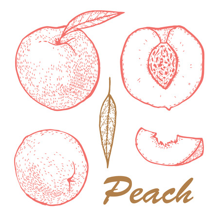 Whole set peach and slices. 向量圖像