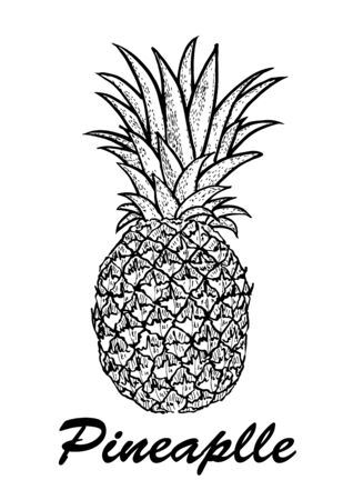 hand drawn pineapple. Exotic tropical fruit drawings isolated on white background. Botanical illustration of fruits.