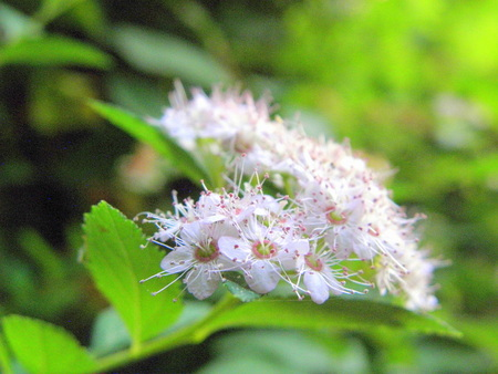 announcing: Tender springtime fruit-tree flowers are announcing plentiful of autumn fruits