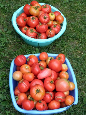 several: Tasty, home-made, several kinds of tomatoes