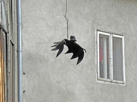 scarry: Scarry and dangerous black Halloweens bat, 1