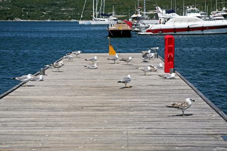 krk: Marina Punat, seagulls, Adriatic coast, island Krk, 12 , Croatia, Europe