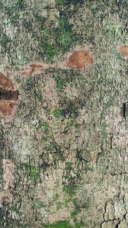 Tree skin Stock Photo