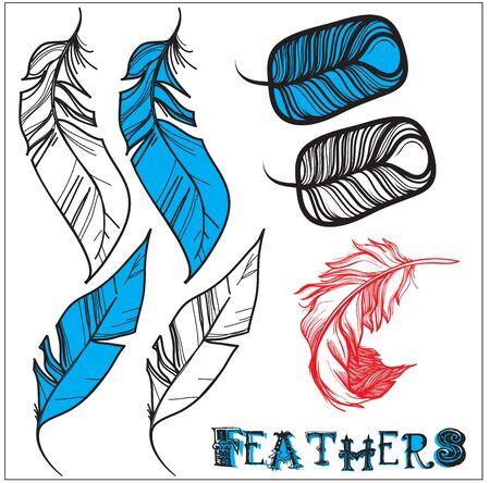 3 variants of bird feathers Illustration