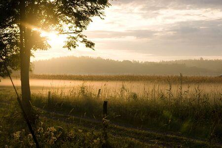 fresh morning: Morning shot of the fading mist.