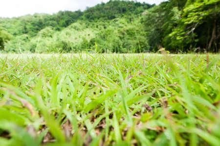 Hermosa hierba verde paisaje