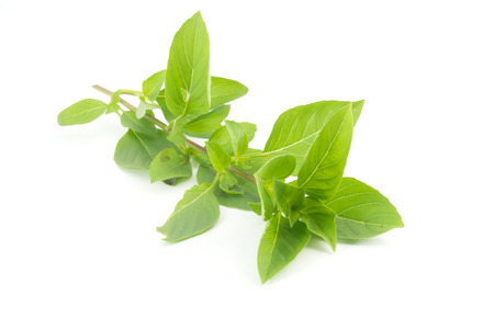 Sweet Basil isolated on a white background Stock Photo
