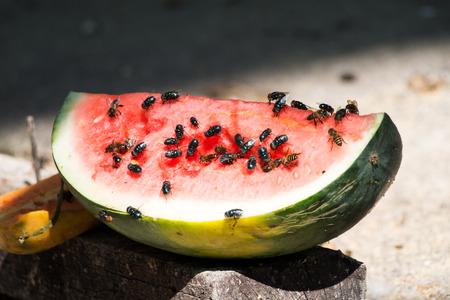 housefly on watermelon.