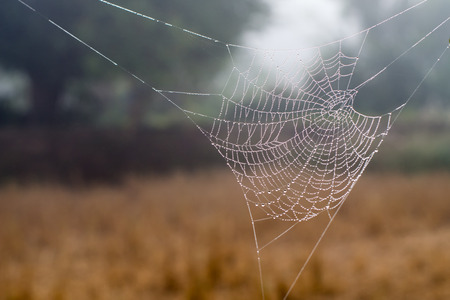 spider web or cobweb with water drops after rain Banque d'images