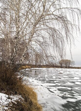 Birch forest worth on a coast of the ice river Stock Photo