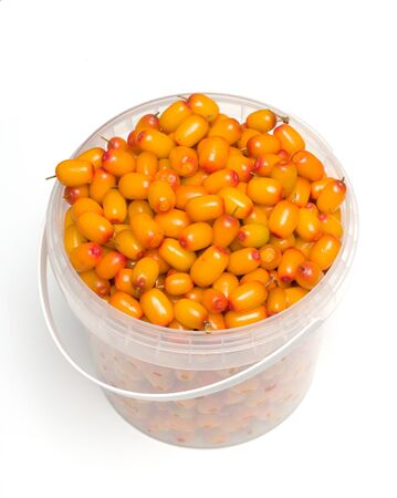a bucket of sea buckthorn isolated on white