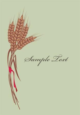 cultivating: manojo de espigas de trigo madura con cinta roja, vectores
