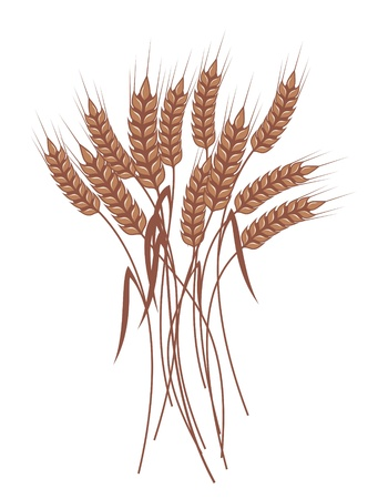 reaping: bunch of ripe wheat ears with red ribbon, vector