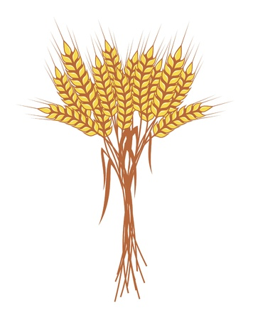 cultivating: bunch of ripe wheat ears with red ribbon, vector