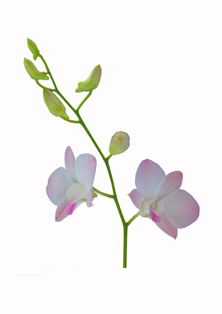 Beautiful purple orchid isolated on white background.