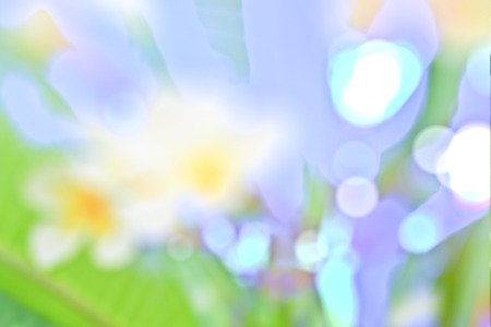 bl: Multicolored defocused bokeh lights for background or texture