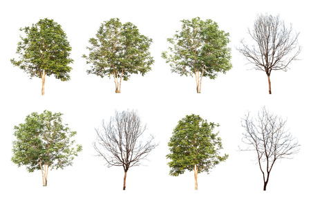 arbol roble: conjunto de ocho árboles verdes y árboles muertos aislados en el fondo blanco