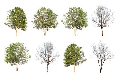 Satz von acht grünen Bäumen und toten Bäume isoliert auf weißem Hintergrund