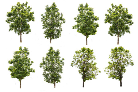 small group of objects: set of eight green trees isolated on white background