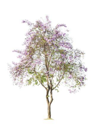 Los árboles aislados sobre fondo blanco